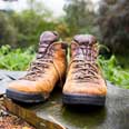 Hiking boots in the woods - IStock