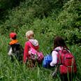 Westwood Forest Program
