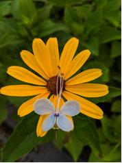 bcg-april-flower1.jpg