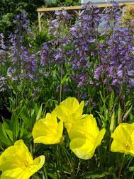 bcg-april-flower2.jpg