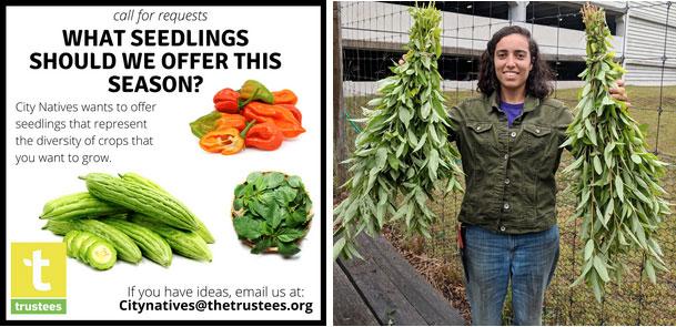 Me holding my molokhia harvest