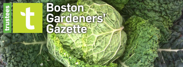 Boston Gardeners' Gazette